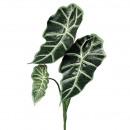 Aloacasia Pick Anda, 3 leaves, L67cm, green-white